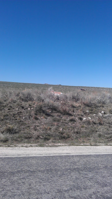 There he is... The antelope the island is named after... Just kidding.. there are huge herds of them