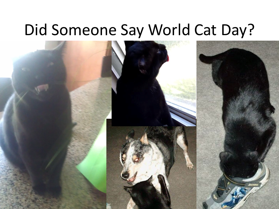 Did Someone Say World Cat Day
